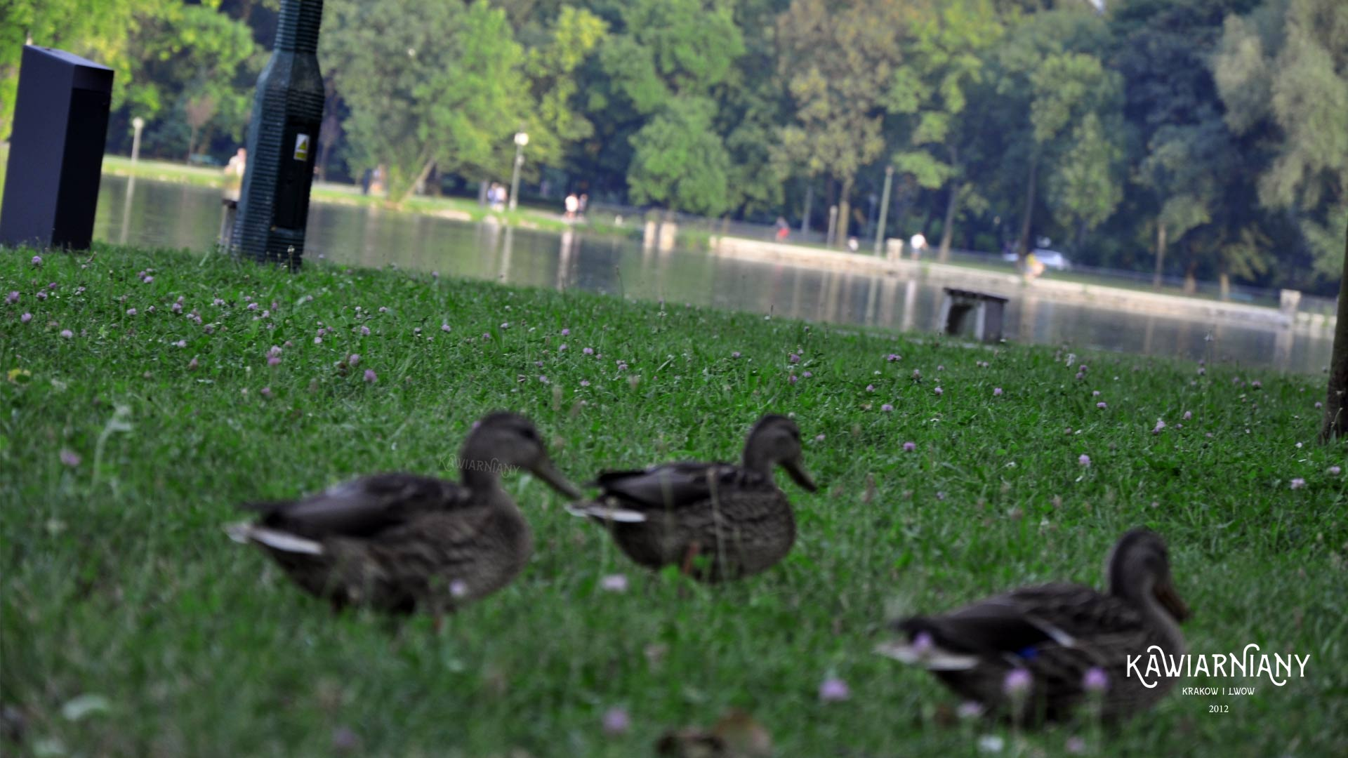 Gdzie nad wodę w okolicach Krakowa? Jeziora, stawy i kąpieliska. 10 najlepszych miejsc
