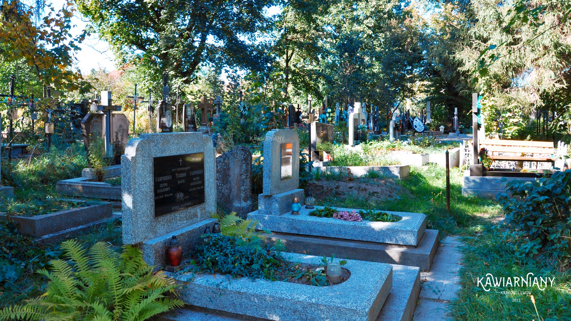 Cmentarz Hołosko