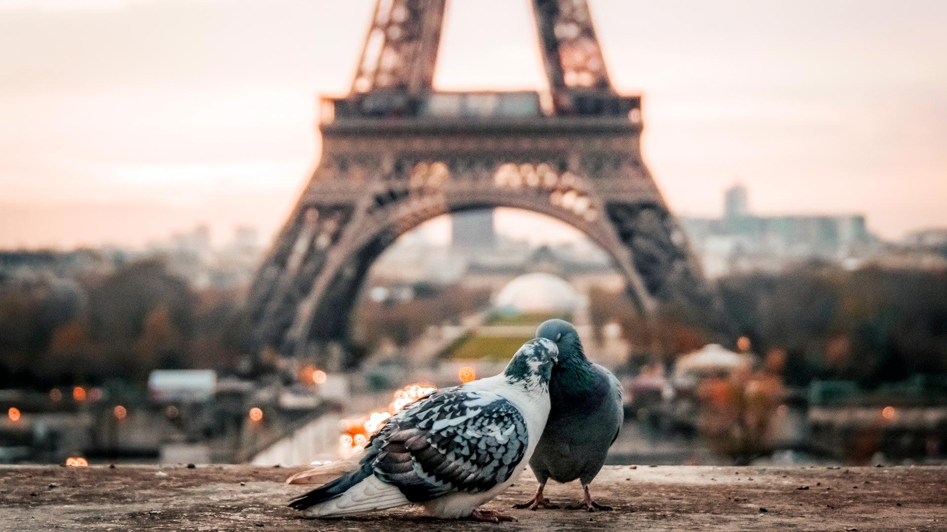 TOP 33 Ciekawostki o Paryżu – turystyczne, symbole i fakty