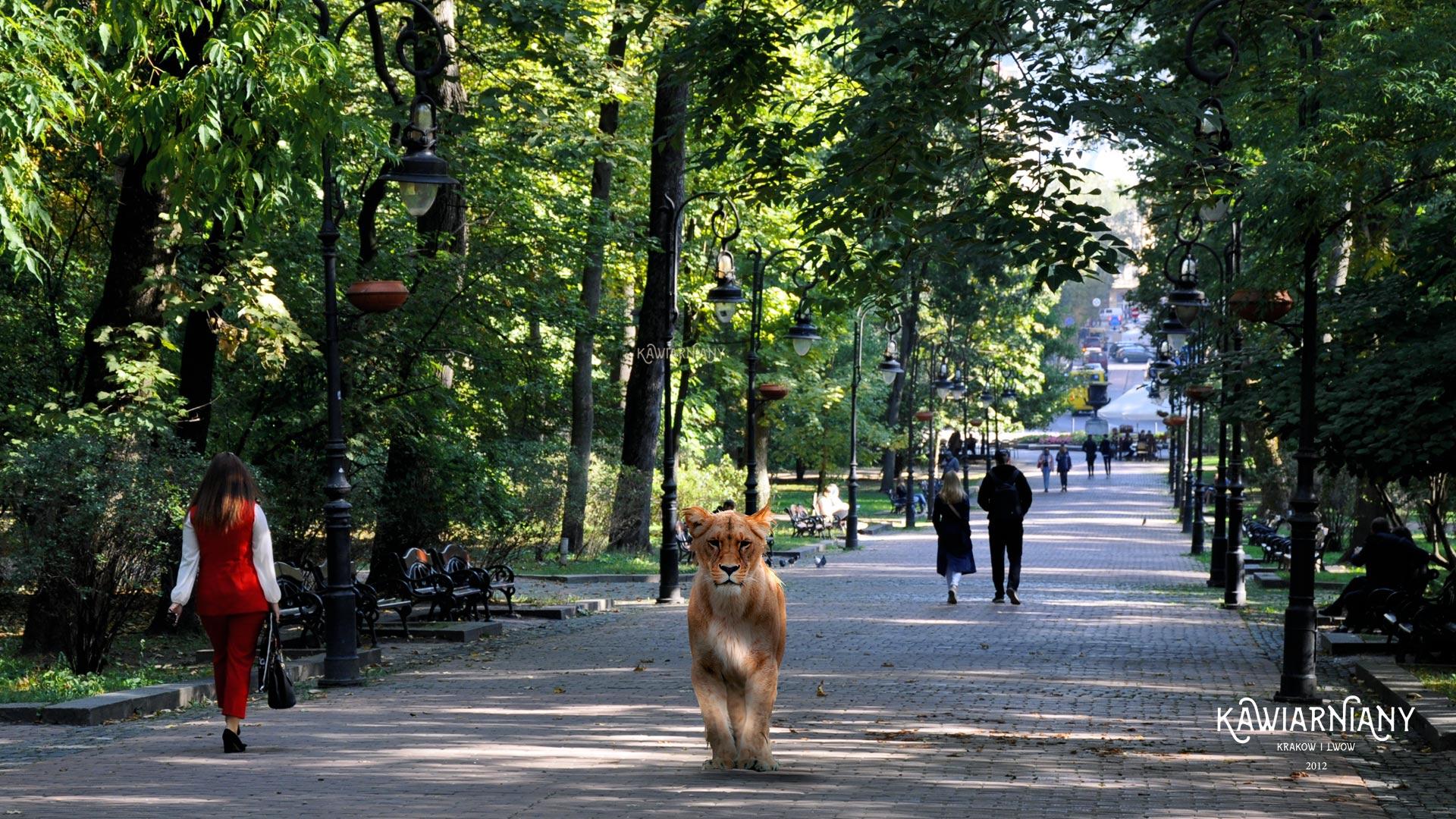 Nietypowi goście na ulicach Lwowa. Tak jeszcze nie było!