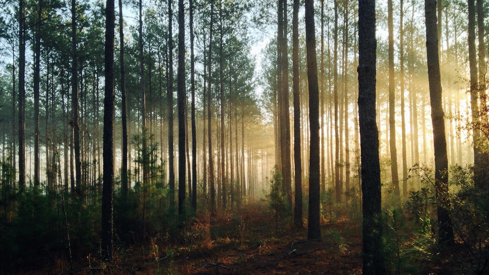 Gdzie do lasu w Krakowie? 9 najlepszych miejsc. Lasy w Krakowie