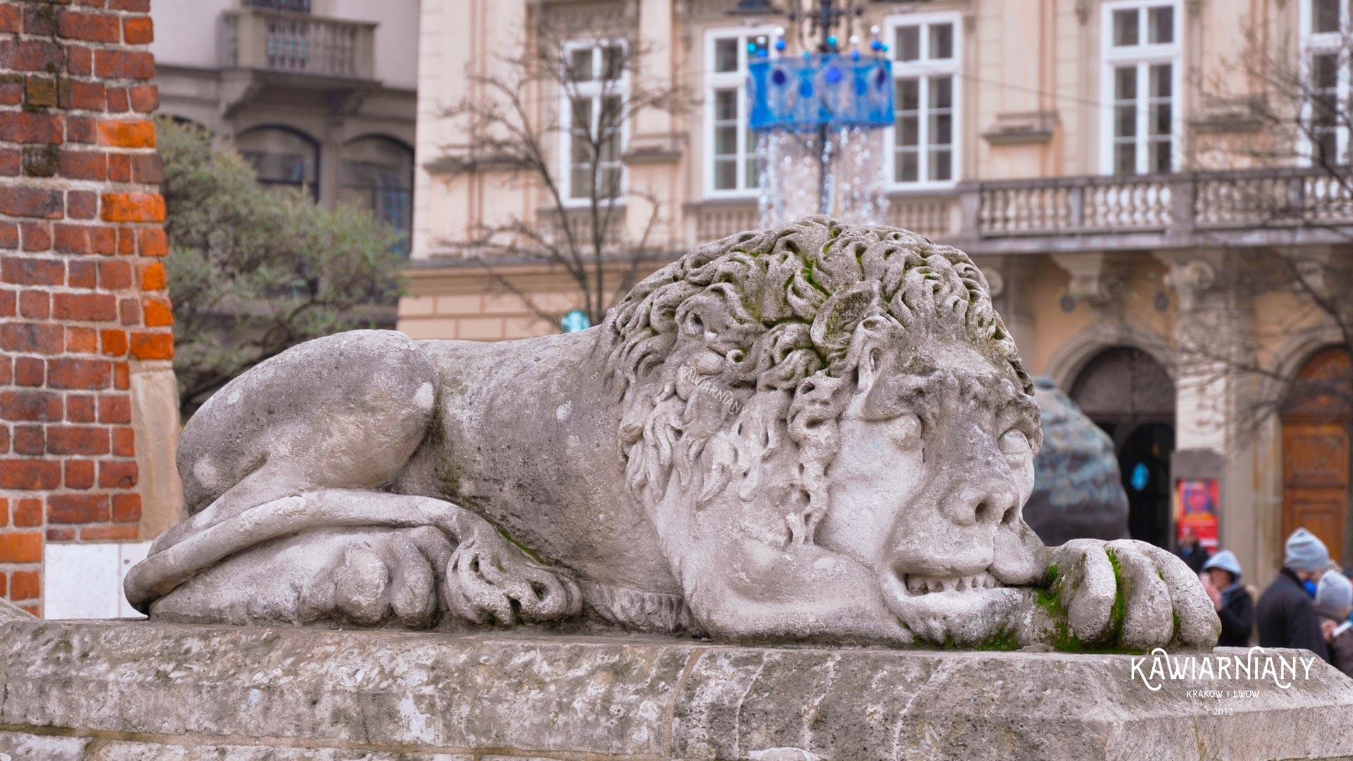 Lwy pod ratuszem w Krakowie. Nigdy nie powinno ich tu być!